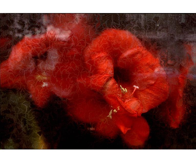 bloem_rood1