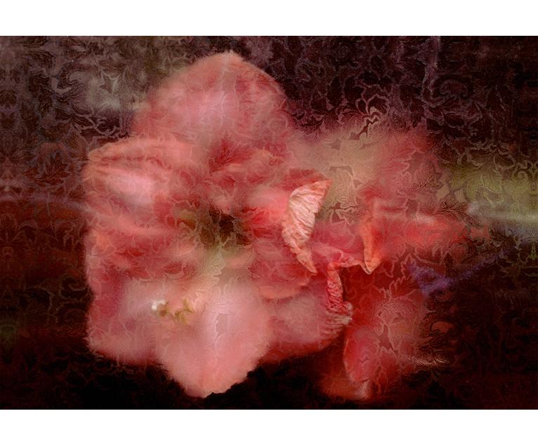 bloem_roze1