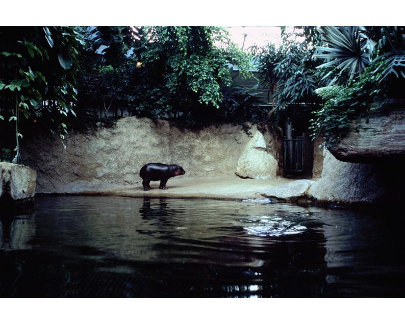 nijlpaard1