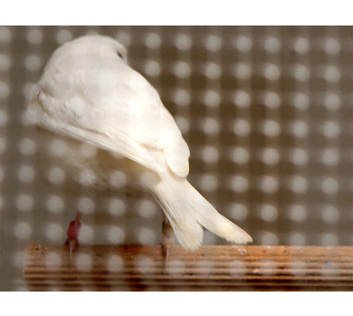 vogel2a