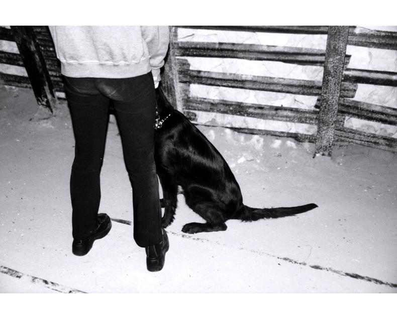 zwartehond