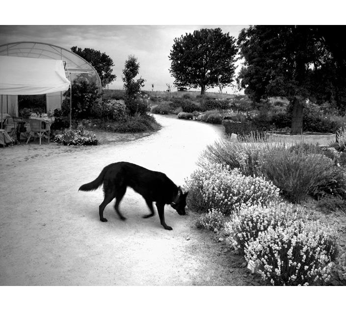 zwartehond_01